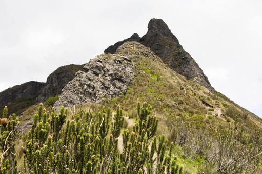 Ecuadorian Mountains