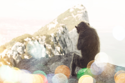 Monkey on Giblartar Rock