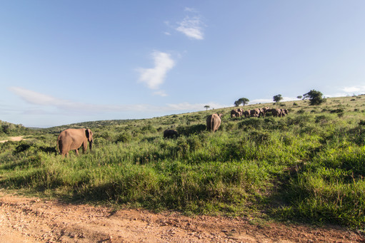 Elephants Family, South Africa