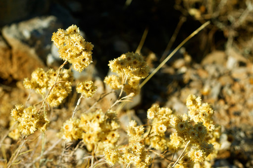 Dry Autumn Flowers