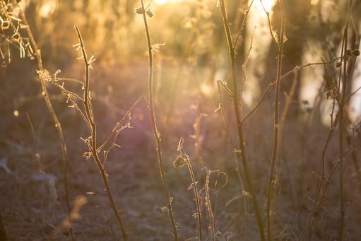 Wild Dry Plants
