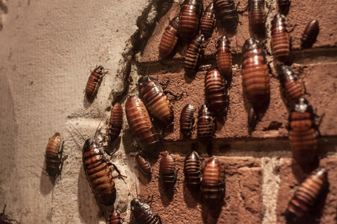 Bugs on the Wall