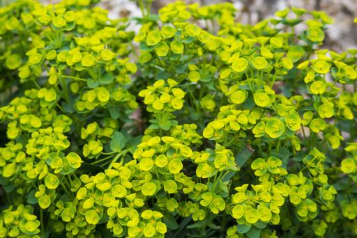 Green Wild Plant