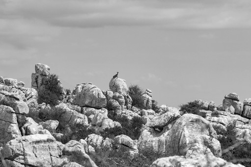 Goat on the rock, Torcal de Antequera, Spain
