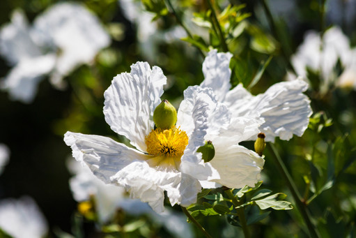 Pixambo_flowers0028