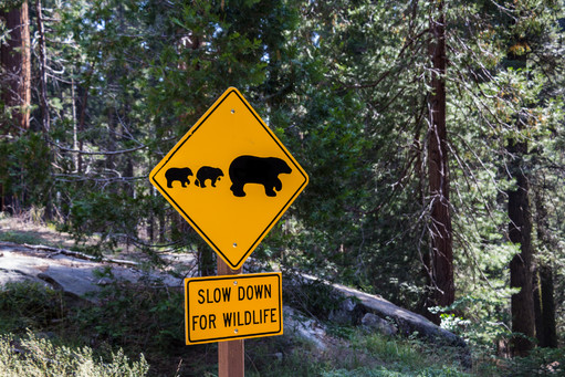 Wild Life in Sequoia National Park