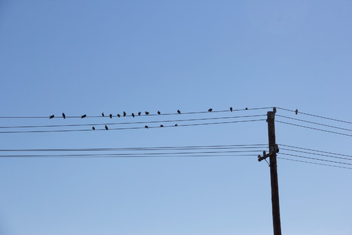 Birds on the power lines