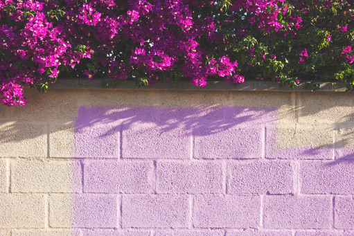 Purple flowers above wall