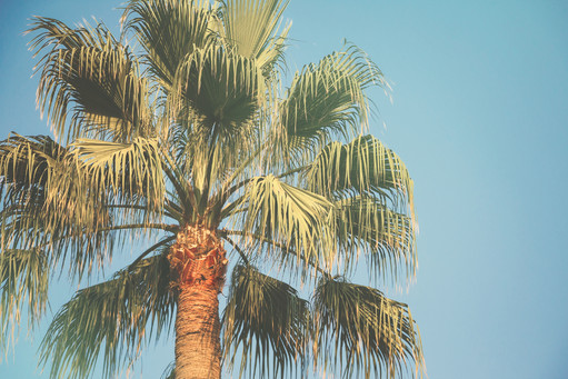 Retro palm tree